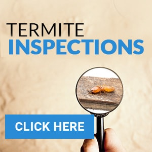 termiteinspection